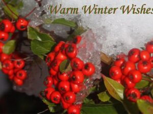 Gift voucher with picture of winter berries